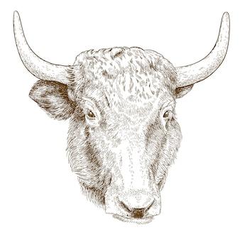 Engraving  illustration of yak head