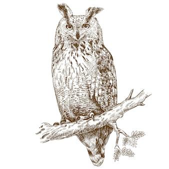 Engraving owl