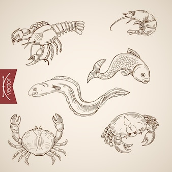 Engraving vintage hand drawn  marine life collection.