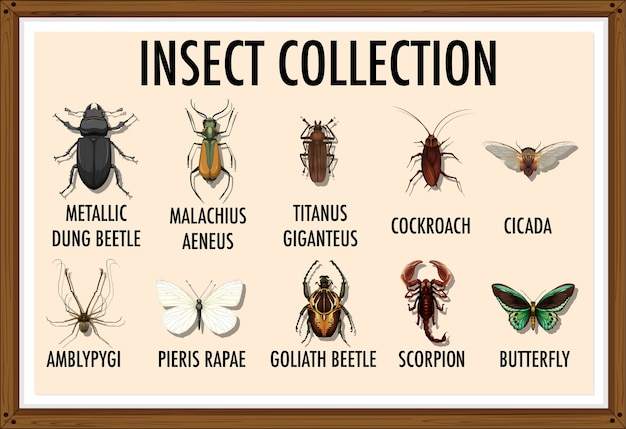 Entomology list of insect collection