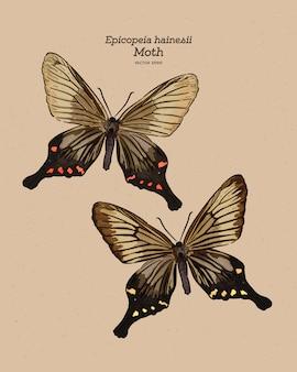 Epicopeia hainesii moth.