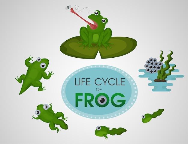 カエルのライフサイクル。漫画かわいいベクトルイラストeps10。