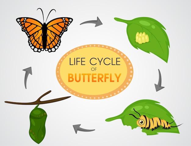 蝶のライフサイクル。漫画かわいいベクトルイラストeps10。