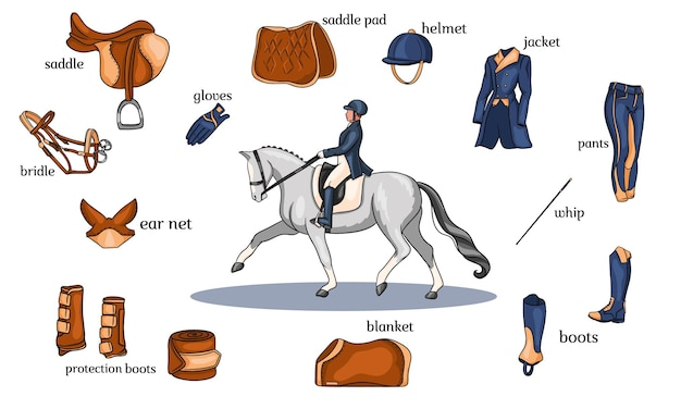 漫画風の馬に乗ったライダーの中央にある乗馬スポーツのインフォグラフィック馬具とライダー装備。トレーニングと装飾のためのベクトルイラストのセットです。