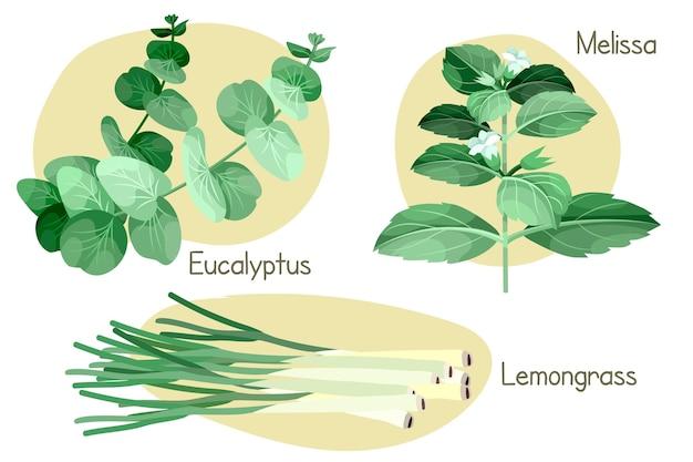 Set verde erba olio essenziale