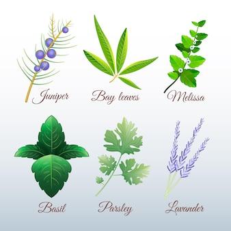 Set di erbe con olio essenziale con dettagli