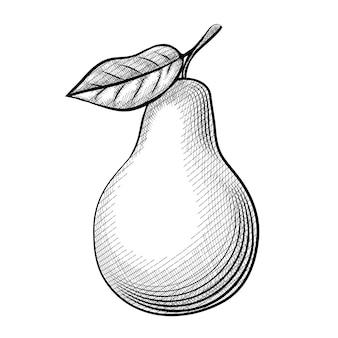 Офорт груша. замечательный эскиз груши с листьями на белом фоне.
