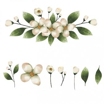 Eucalyptus leaf element watercolor style