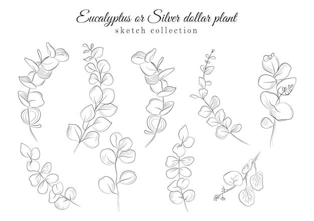 Векторная коллекция растений эвкалипта или серебряного доллара