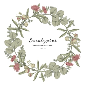 Eucalyptus plant circle frame wreath hand drawn illustration