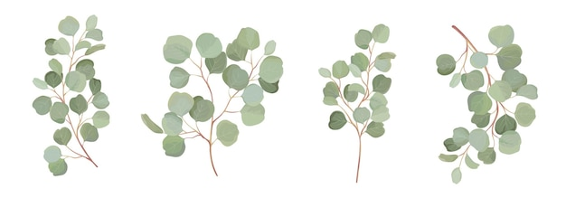 Eucalyptus vector watercolor floral set. green leaf branches, silver dollar greenery, natural leaves tropical elements for wedding invitation, stationary, greetings, wallpapers, fashion, background