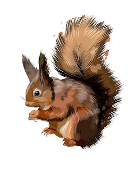 Eurasian red squirrel from a splash of watercolor, colored drawing .