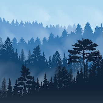 Evening fog over tops of trees of pine forest