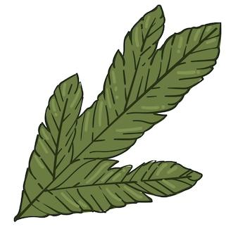 바늘이 있는 상록 주니퍼 가지, 소나무의 고립된 나뭇가지. 새 해, 크리스마스 및 겨울 휴가의 상징입니다. 크리스마스를 위한 전통적인 기호, 가정 장식을 위한 식물학 구성. 평면 스타일의 벡터