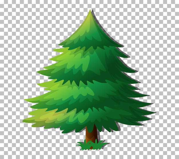 Evergreen tree isolated on transparent background
