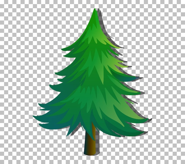 An evergreen tree on transparent background