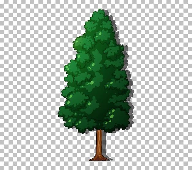 Un albero sempreverde su sfondo trasparente