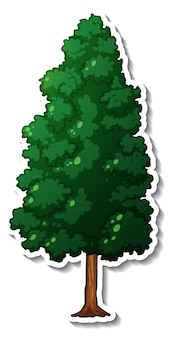 An evergreen tree with green leaves sticker on white background