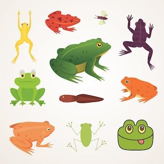 エキゾチックな両生類のセット。さまざまなスタイルのカエル漫画イラスト。熱帯の動物。
