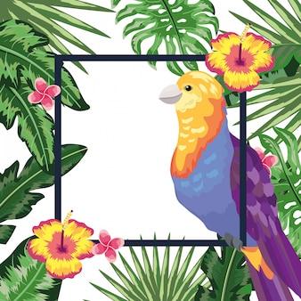 エキゾチックで熱帯の鳥