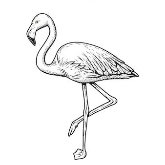 エキゾチックな動物の鳥ピンクフラミンゴハワイ要素