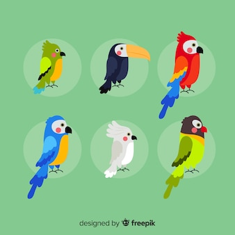 Exotic bird collection flat design