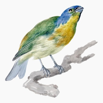 Exotic bird illustration vector, remixed from artworks by aert schouman