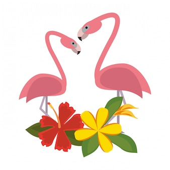 Exotic birds cartoons