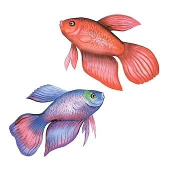 흰색 배경에 수평 아리 물고기 수채화 그림 템플릿에 고립 된 이국적인 물고기 수평 아리