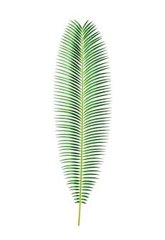 이국적인 단풍과 열대 식물 격리 사고 야자 나무는 정글 또는 열대 우림 식물을 남깁니다