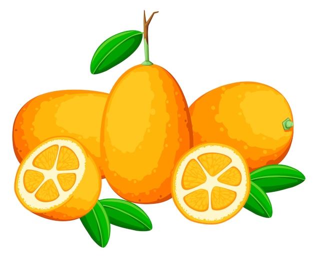 Экзотический фруктовый кумкват с зелеными листьями. свежие фрукты . иллюстрация на белом фоне. целый и нарезанный апельсиновый сок кумкват.