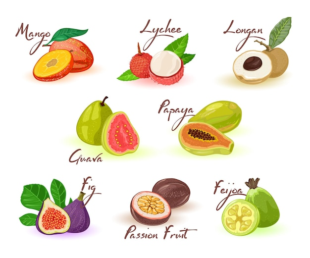 메뉴, 레시피, 요리 책, 시장 라벨, 포장용 글자가 포함 된 이국적인 과일 구색.