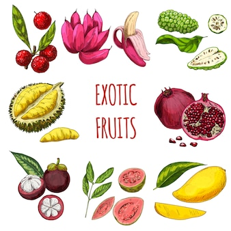 Exotic fruits collection