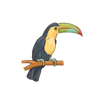 Экзотическая гавайская тропическая птица тукан на белом
