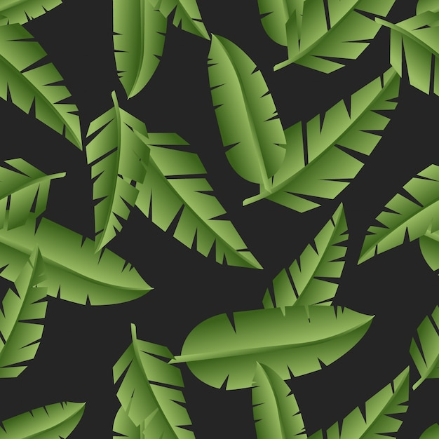 Exotic leaves palm on black pattern background