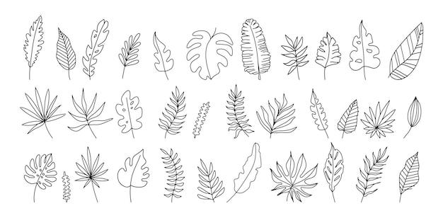 Экзотические листья набор черно-белые векторные иллюстрации