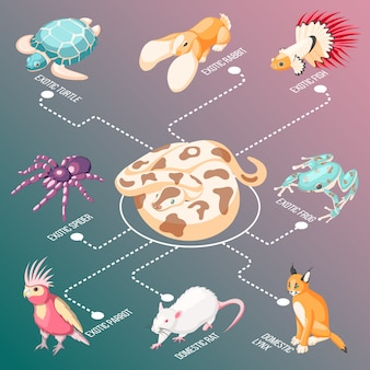 Exotic pets isometric flowchart