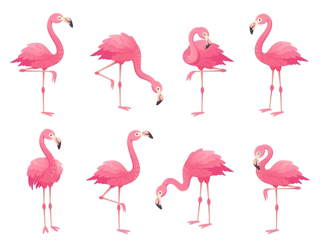 Exotic pink flamingos birds.