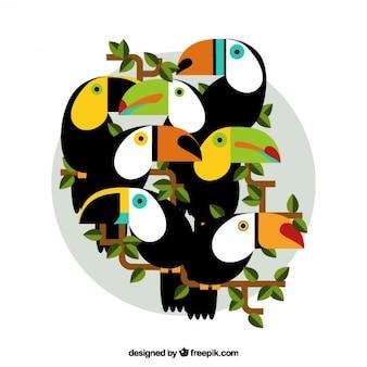 Exotic toucans in flat design