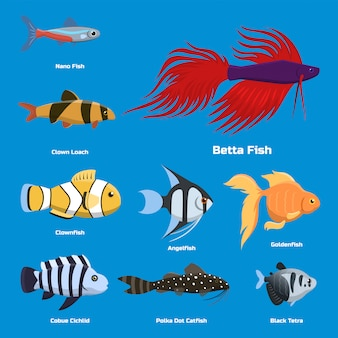 Exotic tropical aquarium fish different colors underwater ocean species aquatic nature