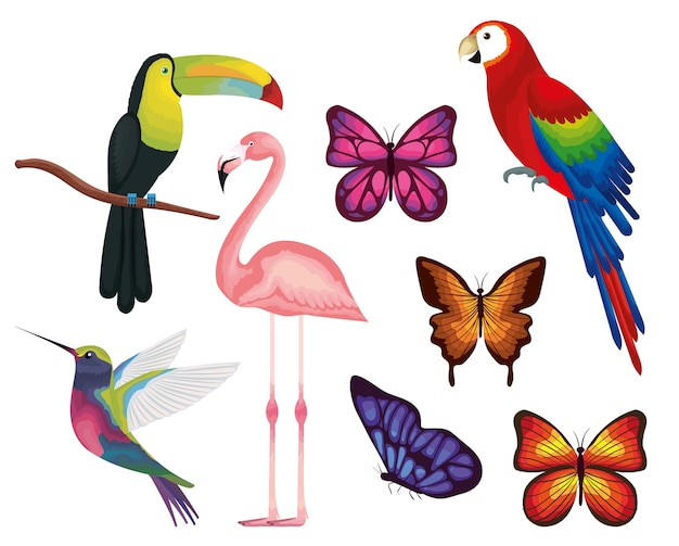 Exotic and tropical birds and butterflies vector illustration design