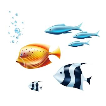 エキゾチックな熱帯魚セットイラスト