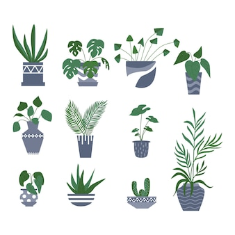 Exotic tropical houseplant in a flower pot. flat vector illustration.