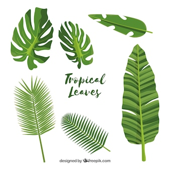 Exotic tropical leaf collection with flat design