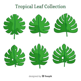 フラットデザインのエキゾチックな熱帯雨林コレクション