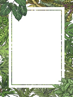 Exotic tropical leaves frame