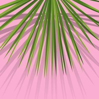 이국적인 열대 야자 잎. 밀레니엄 분홍색 배경에 식물 잎입니다. 이국적인 배경