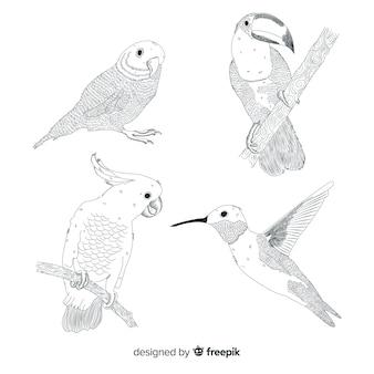 Exotic tropical wild bird collection
