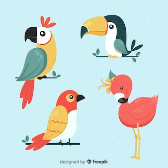 Exotic tropical wild bird collection