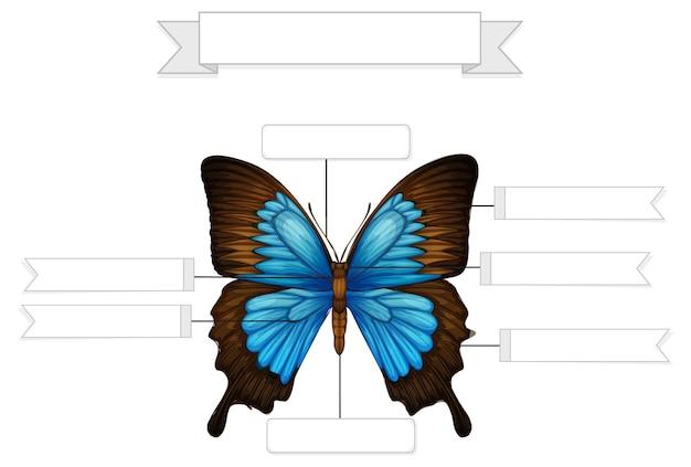 Anatomia esterna di un foglio di lavoro a farfalla